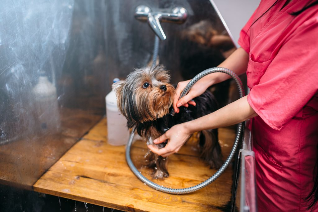 End-to-End installations of Outside dog wash stations